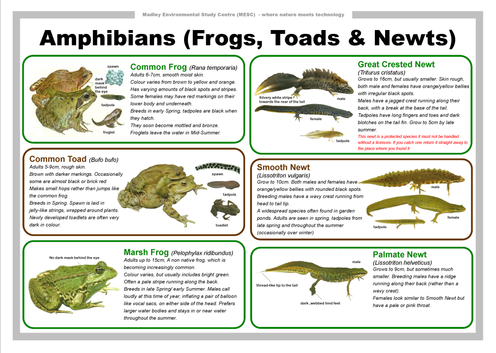 Five Characteristics of Amphibians  Animals  momme